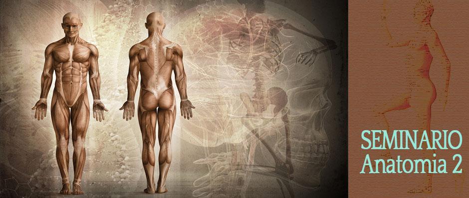 Seminario Anatomia 2